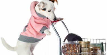 dépenses entretien chien