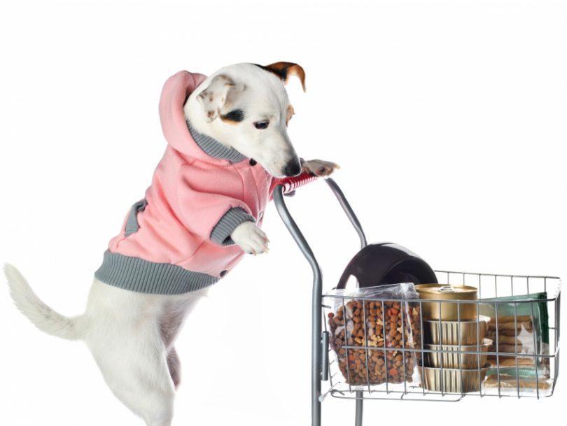 entretien d'un chien