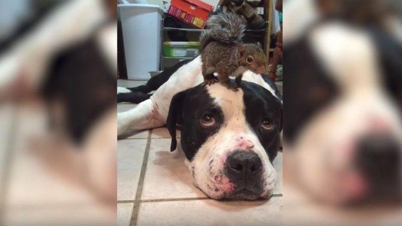 vidéo d'un chien et d'un écureuil