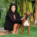 kim kardashian et son chien