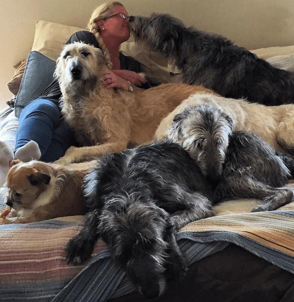 4 lévriers irlandais couchés avec leur maîtresse sur son lit