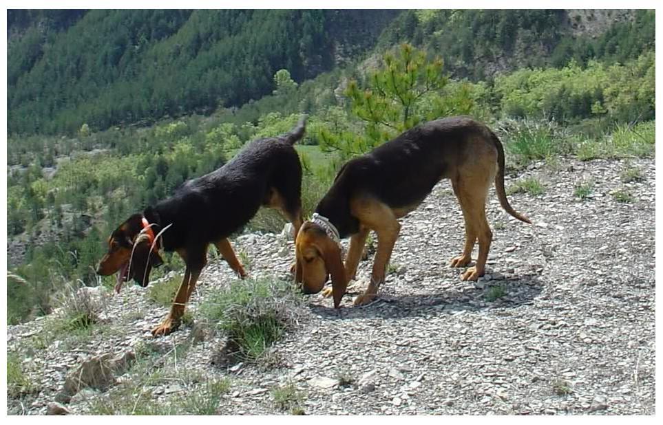 bruno du jura chasse montagne