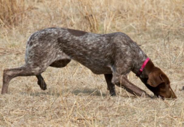 Comment fonctionne l 39 odorat de votre chien blog canin for Odeur qui remonte de la douche