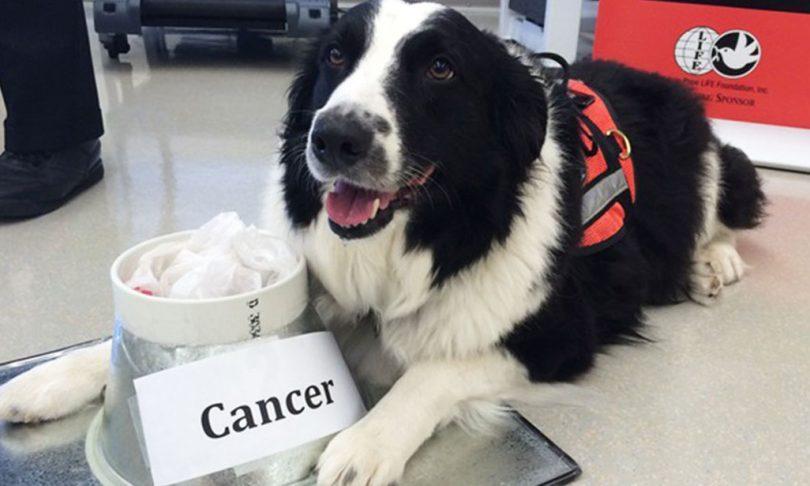 chien qui déteste le cancer