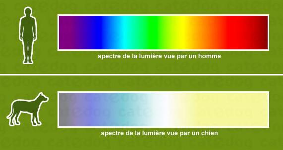 couleurs que voit le chien