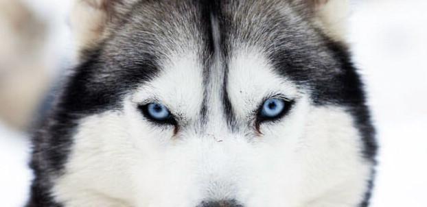 comment le chien voit-il?
