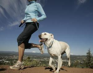 faire du sport avec son chien