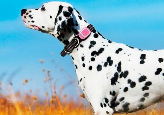 collier GPS pour chien