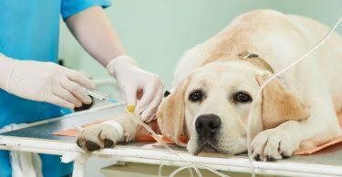 Combien coûte une mutuelle pour chien ?