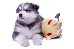 combien co te une mutuelle pour chien blog canin. Black Bedroom Furniture Sets. Home Design Ideas