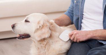 perte de poils du chien