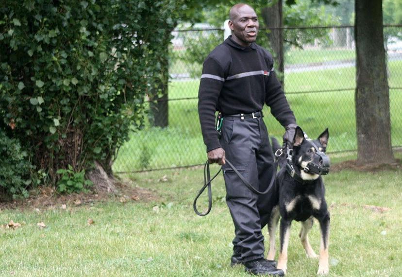 chien sécurité