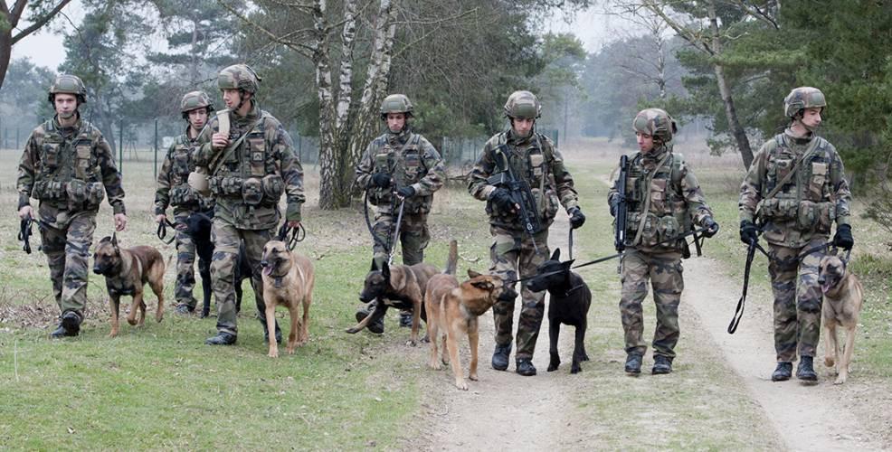 chiens armée
