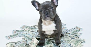 budget annuel chien