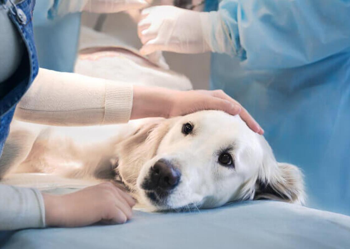 frais vétérinaires