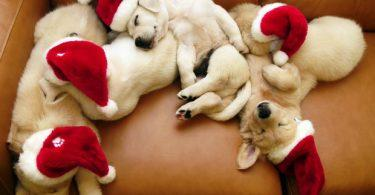 cadeau pour chien