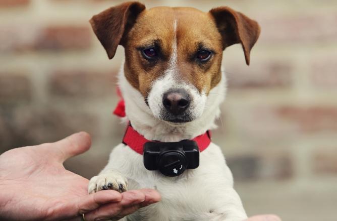 collier électrique pour chien