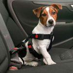 harnais de sécurité en voiture pour chien