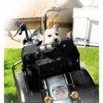 sac de transport pour chien arrière en moto