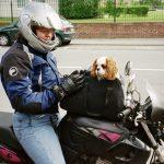 sac de transport pour chien avant en moto