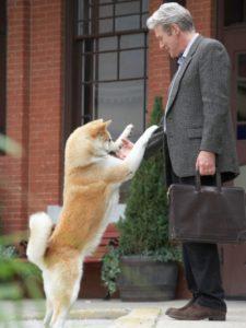 chien qui saute sur un homme