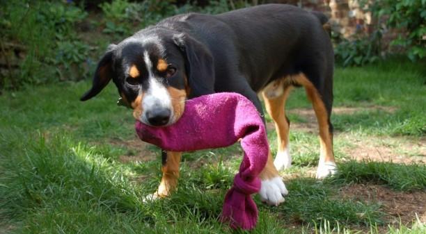 fabriquer un jouet pour chien à mastiquer