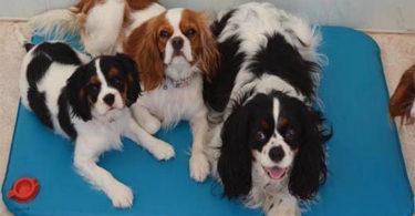 tapis thermique pour chien