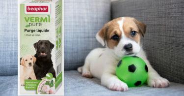 vermifuge pour chien vermipure beaphar