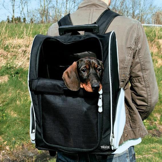 sac à dos pour transporter un chien