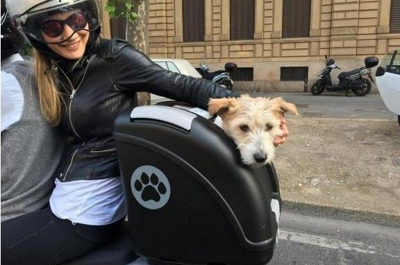 sac de transport pour chien à l'arrière de la moto