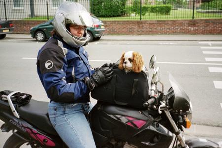 sac de transport pour chien à moto sur le réservoir