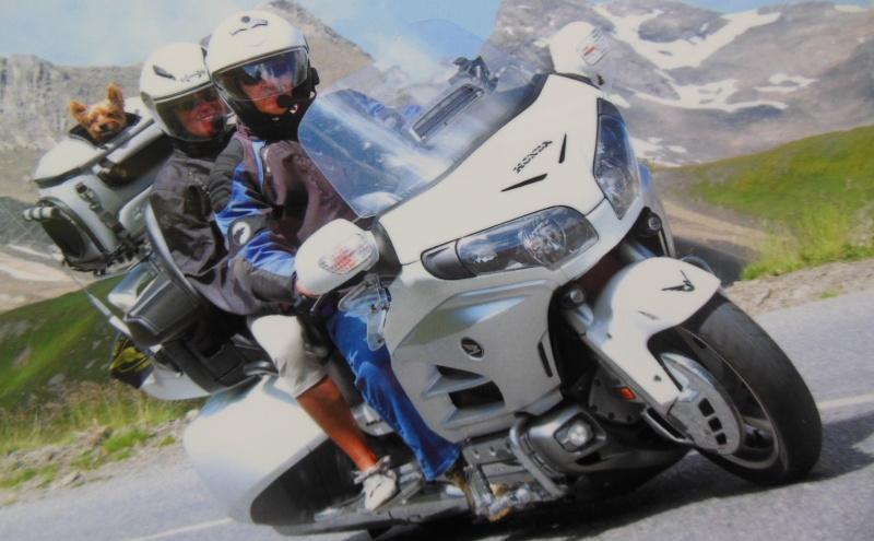 sac de transport pour chien à moto