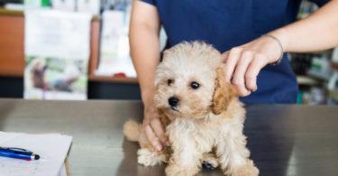 vétérinaire en ligne