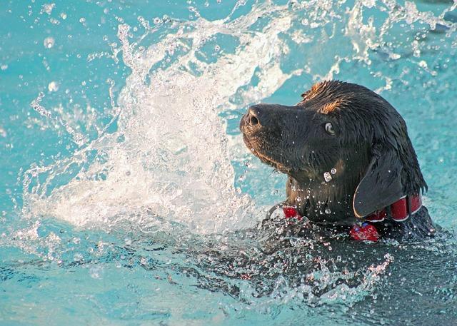 apprendre son chien à nager