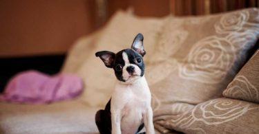 empêcher chien monter canapé
