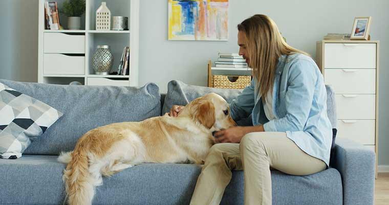 interdire accès canapé au chien