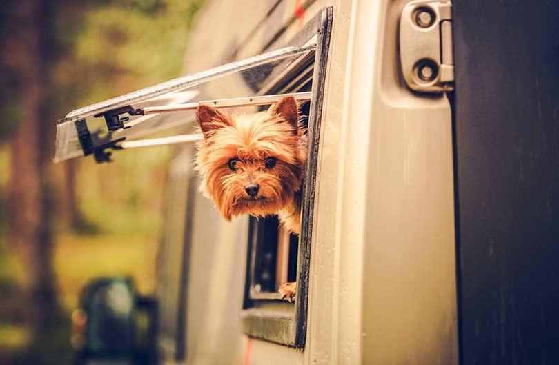 alimentation chien vacances