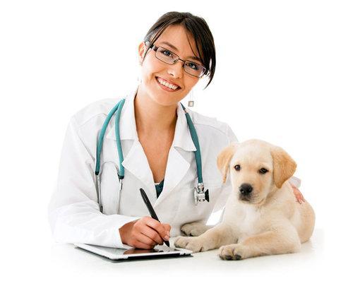 Prix d'hospitalisation vétérinaire
