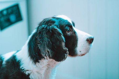 Prix d'une radiothérapie pour chien