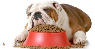 Croquettes sans séréales pour chien