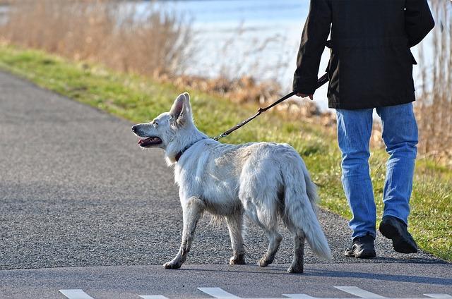 Pet-sitter pour chien