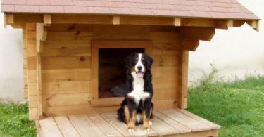 isoler niche pour chien
