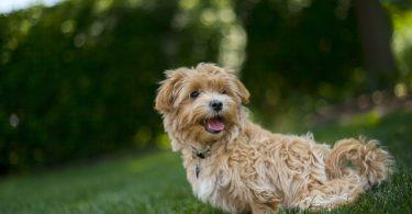 Budget pour la santé de son chien