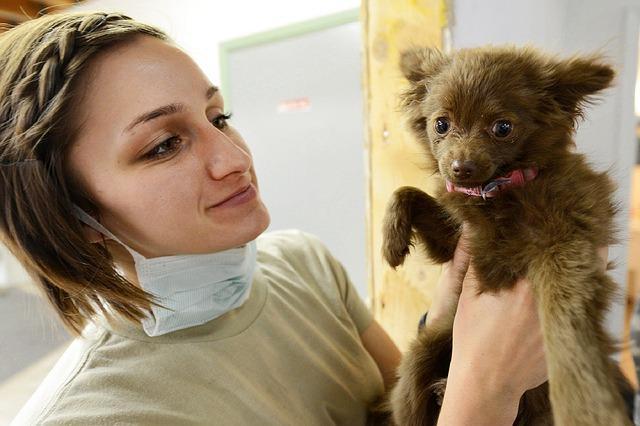 Gérer le budget santé de son chien avec une assurance