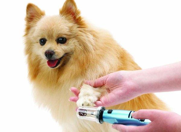 Coupe ongles pour chien