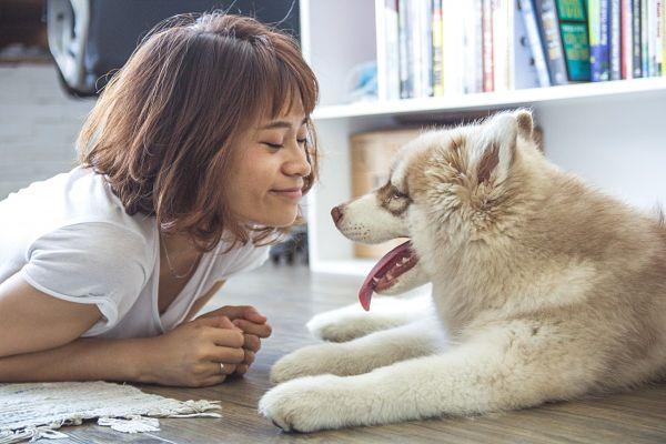 Prix d'un détartrage chez le chien