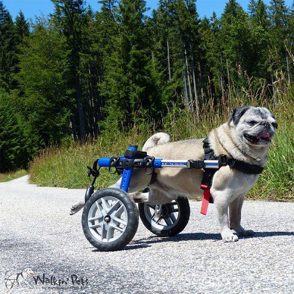 Chariot pour chien handicapé Walkin Wheels