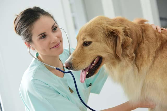 garanties assurance sante chien
