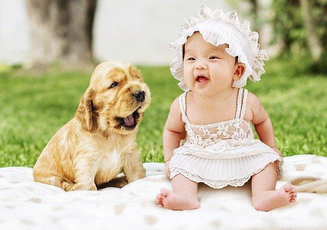 Gérer les relations entre son chien et son bébé