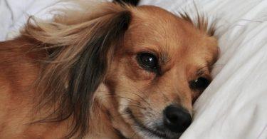 Scanner pour chien